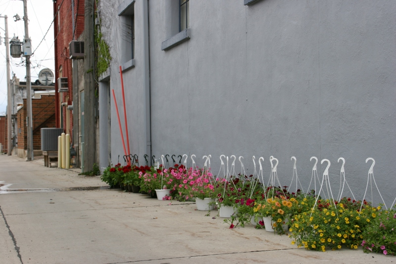 Hanging baskets line the alley behind Larson's Mercantile.