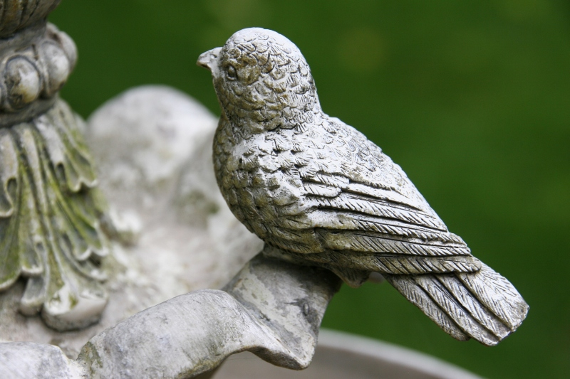 I won't give crows the satisfaction of photographing them. But I did photograph this bird on a tabletop fountain.