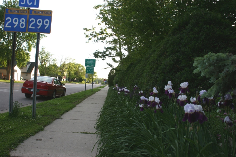 Irises stretch the length of the property along a stretch of Minnesota Highway 60.