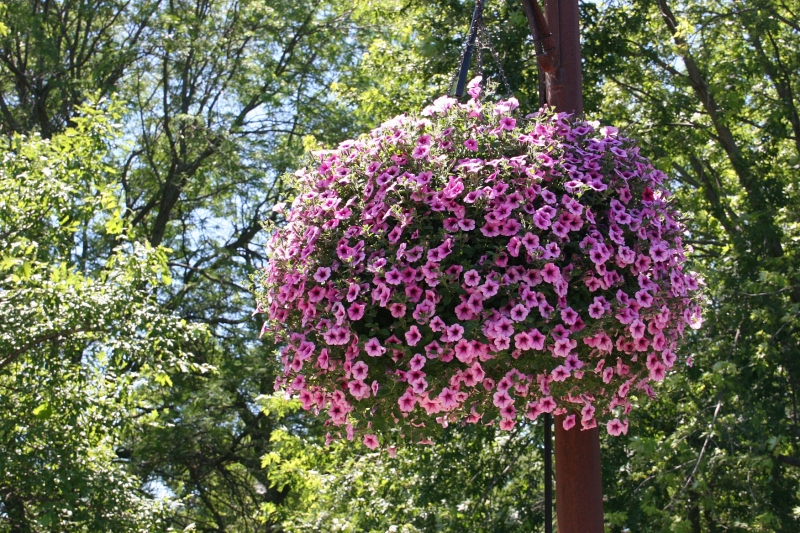 Gorgeous flower baskets hang along the recreational bridge.