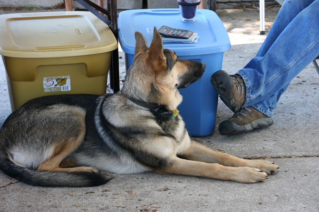 A vendor's dog.