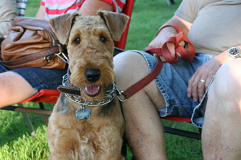 In the casual atmosphere of the park, some concert goers bring their dogs.