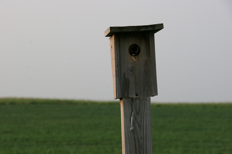 A birdhouse, perfect in its simplicity.