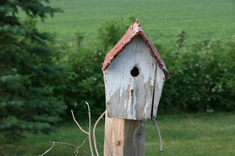 A rural home for the birds.