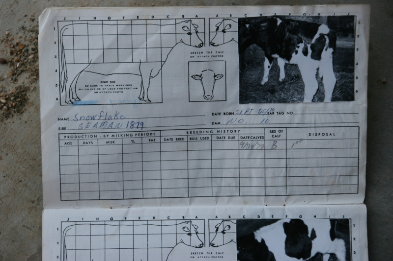 Growing up on our crop and dairy farm, my eldest brother, Doug, photographed the cows and recorded details about them. My middle brother treasures this compilation of information from our farm. And so do I. Memories...