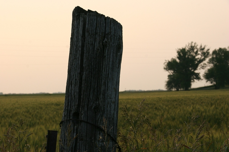 There's something poetic about an old wooden fence post.