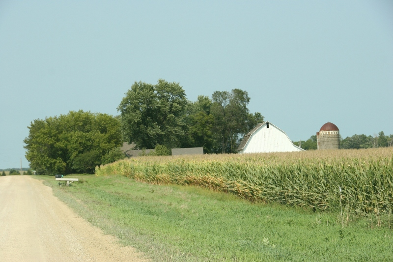 On the edges of fields, corn leaves are drying.