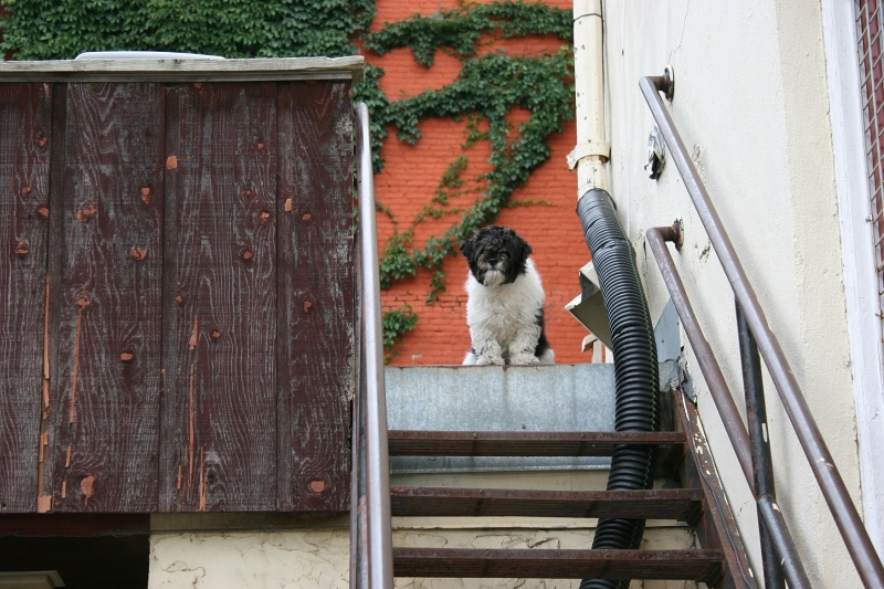 A dog waits on stairs overlooking the garden.