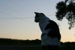 Garden, Gretchen the cat at sunset1