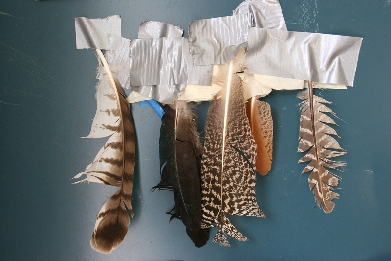 Found feathers displayed in the barn.
