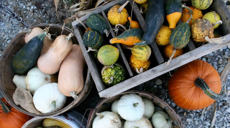 Garden goods provided for great fall decorating.