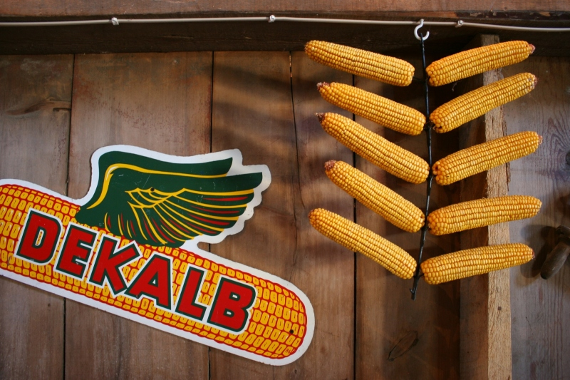 Barn dance, 24 Dekalb sign & corn