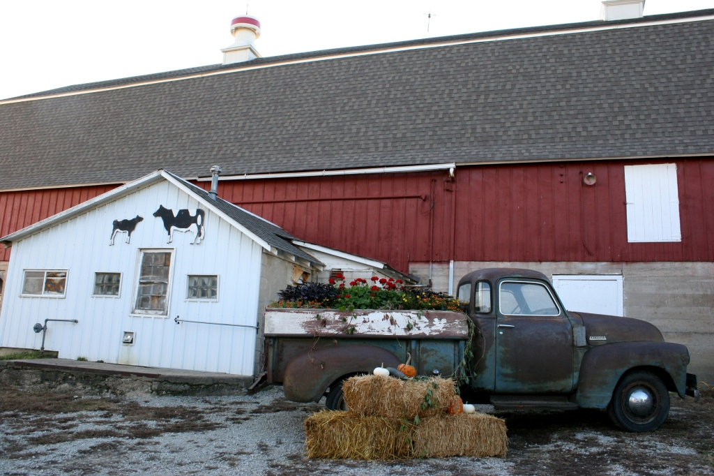 A welcoming scene staged next to the barn and attached milkhouse.