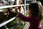 Market, feeding goats