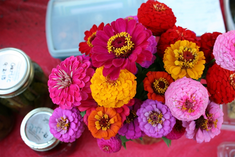 Zinnias, my favorite cut flowers from the garden.