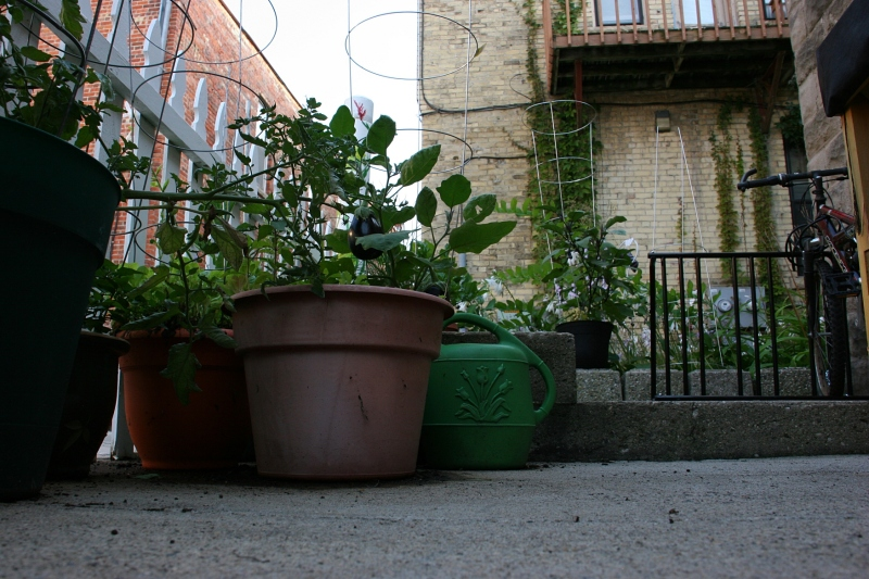 Plants fill pots and, to the right, you can see the edge of a bike rack.