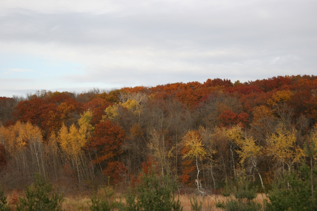 In the final days of October, my camera landed on this stunningly beautiful treeline near Shieldsville.