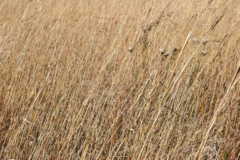 Prairie grasses have dried to a muted brown at River Bend Nature Center.