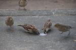 Exploring La Crosse, 245 birds eating icecream