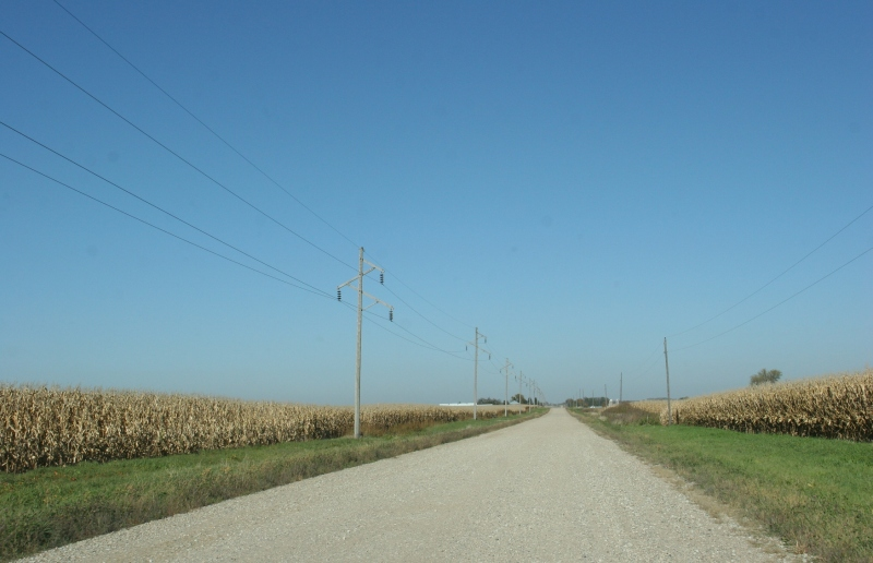 Unharvested cornfields line a gravel road in western Rice County, Minnesota.