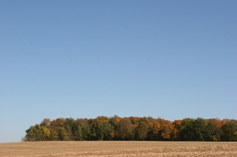 My eyes are drawn to the clear blue sky, the leaves changing color and the muted tones of the harvested cornfield.