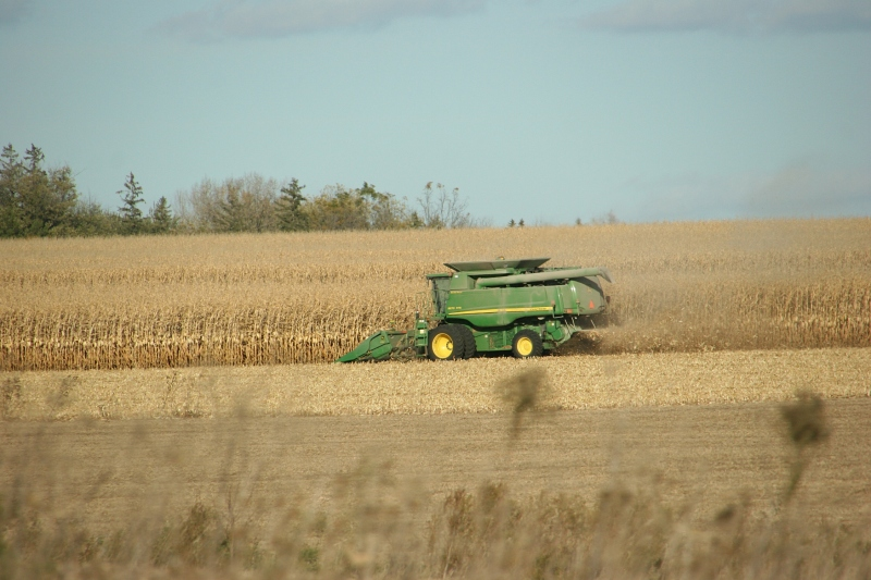 Harvesting corn along U.S. Highway 52 in the Rochester area in mid-October.