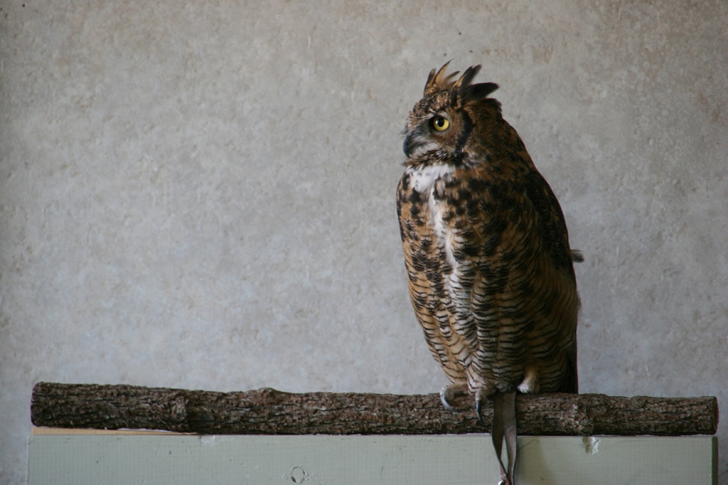 One of the center's live owls. I don't know its identity.