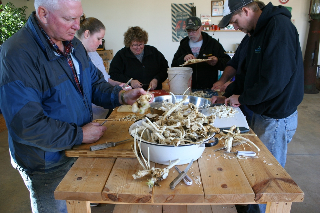 STEPS FOUR & FIVE: Family members peel horseradish before it's washed for a second time.