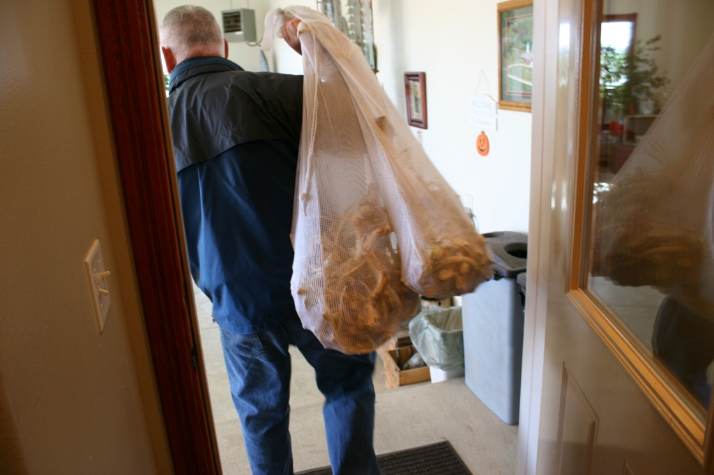 STEP THREE: The horseradish if placed in laundry bags and washed in the washing machine. Here my brother carries the just-washed horseradish to the work area in his garage.