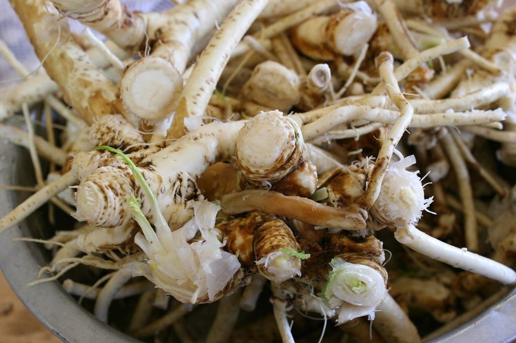 The roots are now ready to be peeled with a knife and/or potato peeler.