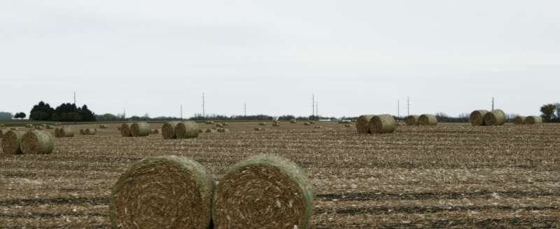 Cornstalk bales litter fields between Redwood Falls and Morgan.