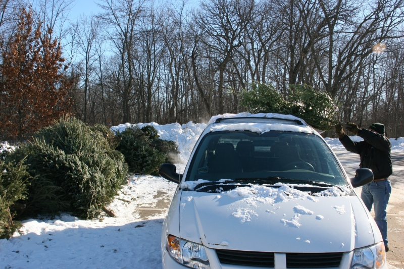 Randy unloads our Christmas tree.