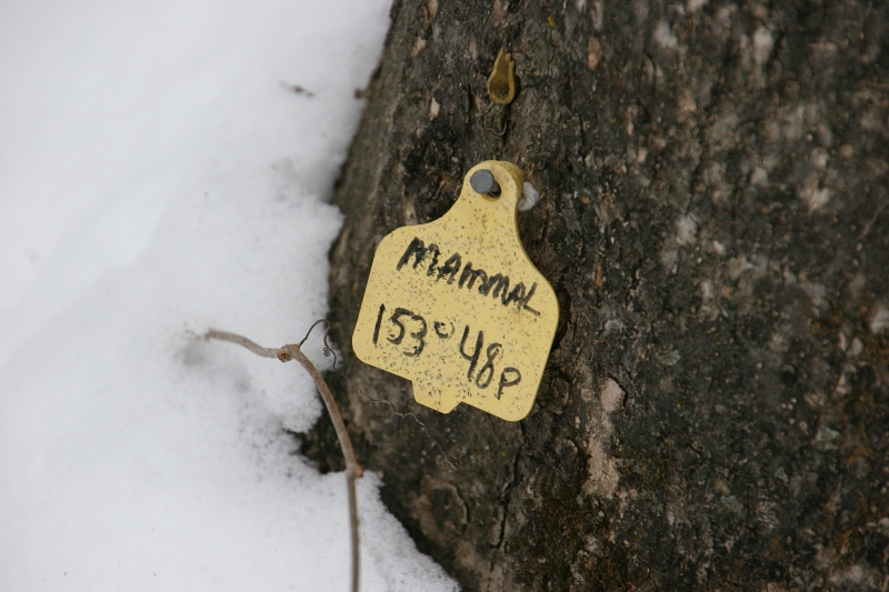 A tag at the base of a tree.