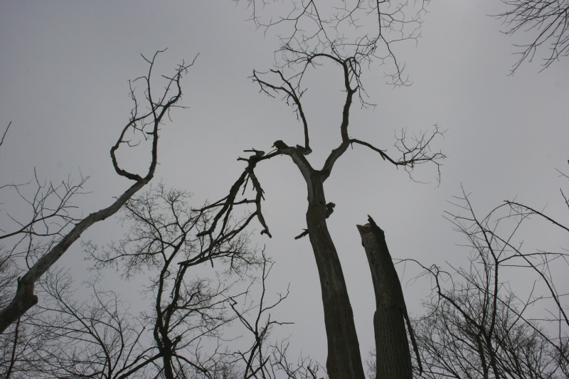 Nature Center, 6 trees