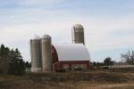 Rural Minnesota, 102 barn &cattle