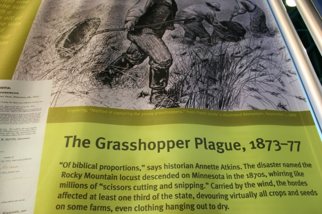 I cannot imagine so many grasshoppers that they obliterated everything.
