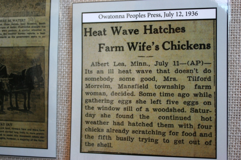 Steele County disasters, 104 chicks hatch in heat