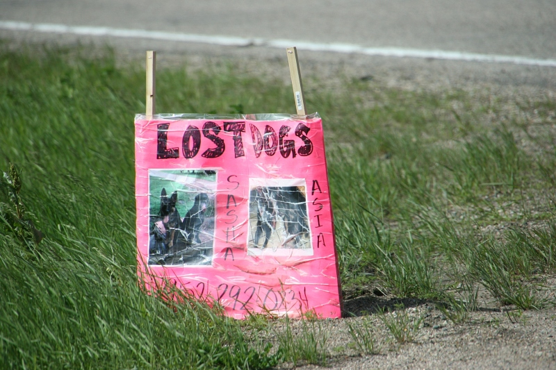 Lost dogs sign, 5