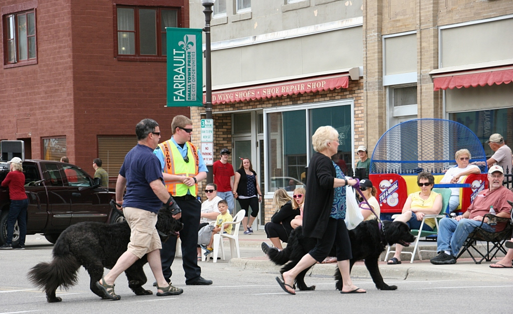 Parade, 6 big dogs