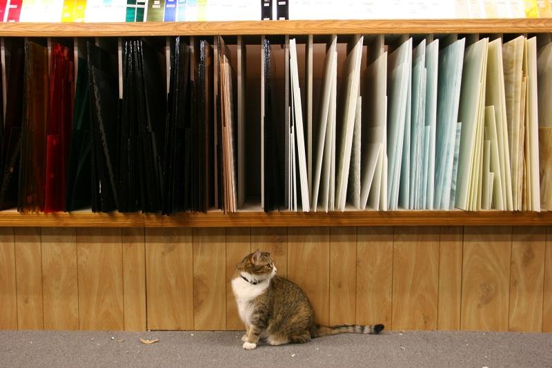 Daisy the shop cat.