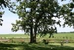 Aspelund Winery & Peony Gardens, 56 tree and fieldsbeyond