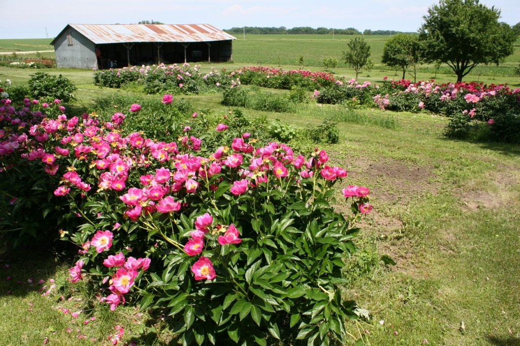 Peony beds mingle between farm buildings on this lovely rural Goodhue County site.