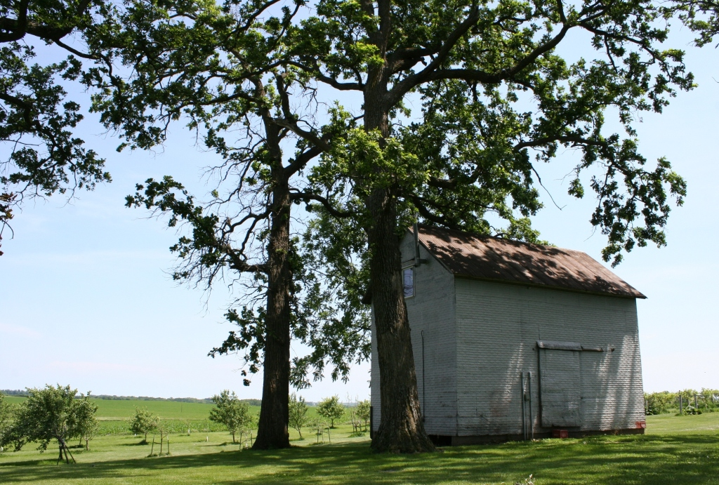 My favorite old building on the farm site.