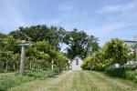 Aspelund Winery & Peony Gardens, 80 vineyard andshed