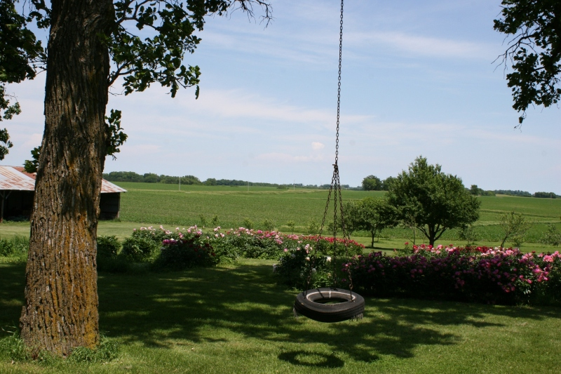 This tire swing, with its chain grown into a tree branch, adds simple country charm to the yard.
