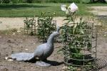 Aspelund Winery & Peony Gardens, 99 peacock &peony