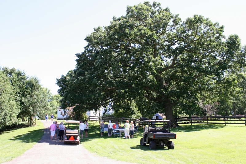 Garden tour guests visit under a towering oak.