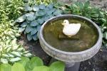 McAdam garden, 73 bird bath &hosta