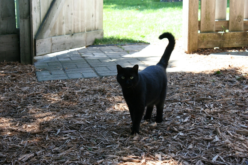 Shadow the cat greeted garden tour visitors.