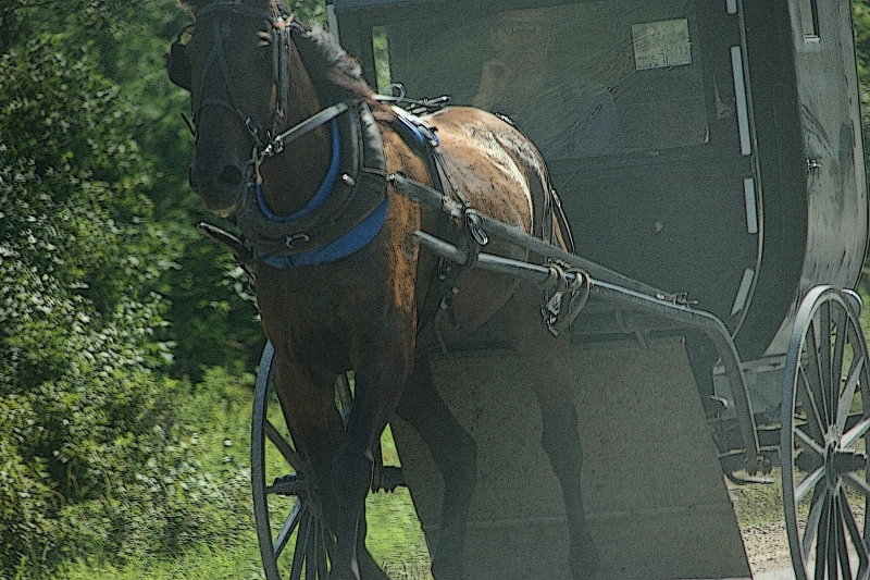 Amish, 190 horse & buggy close-up